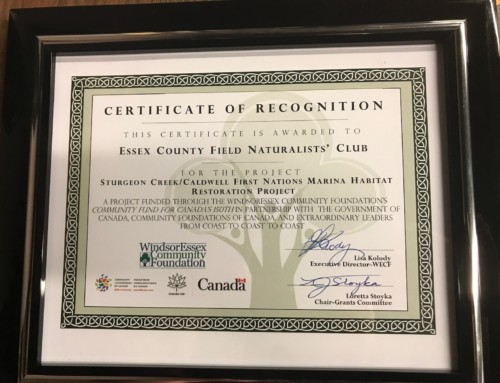 Sturgeon Creek/Caldwell First Nations Marina Habitat Restoration Grant