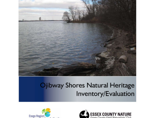 Ojibway Shores Natural Heritage Inventory/Evaluation Report